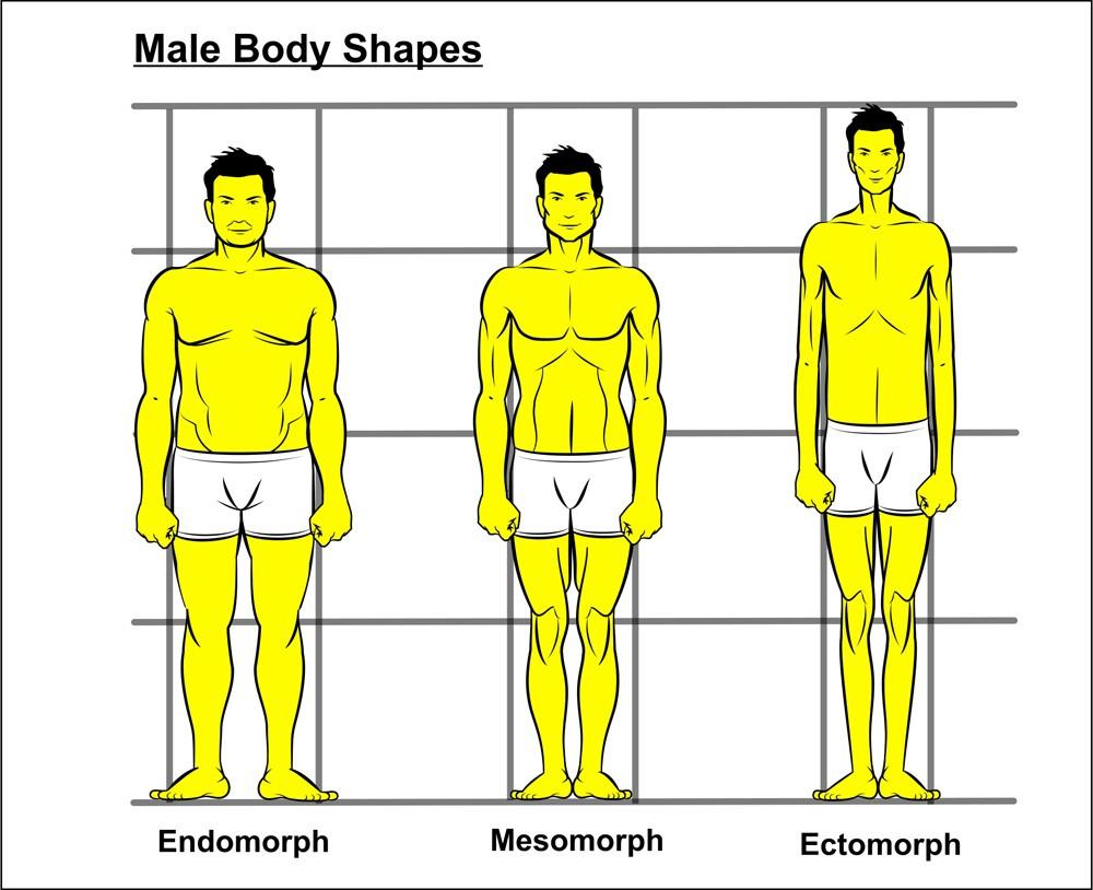 different male body types In Shape Mesomorph Men